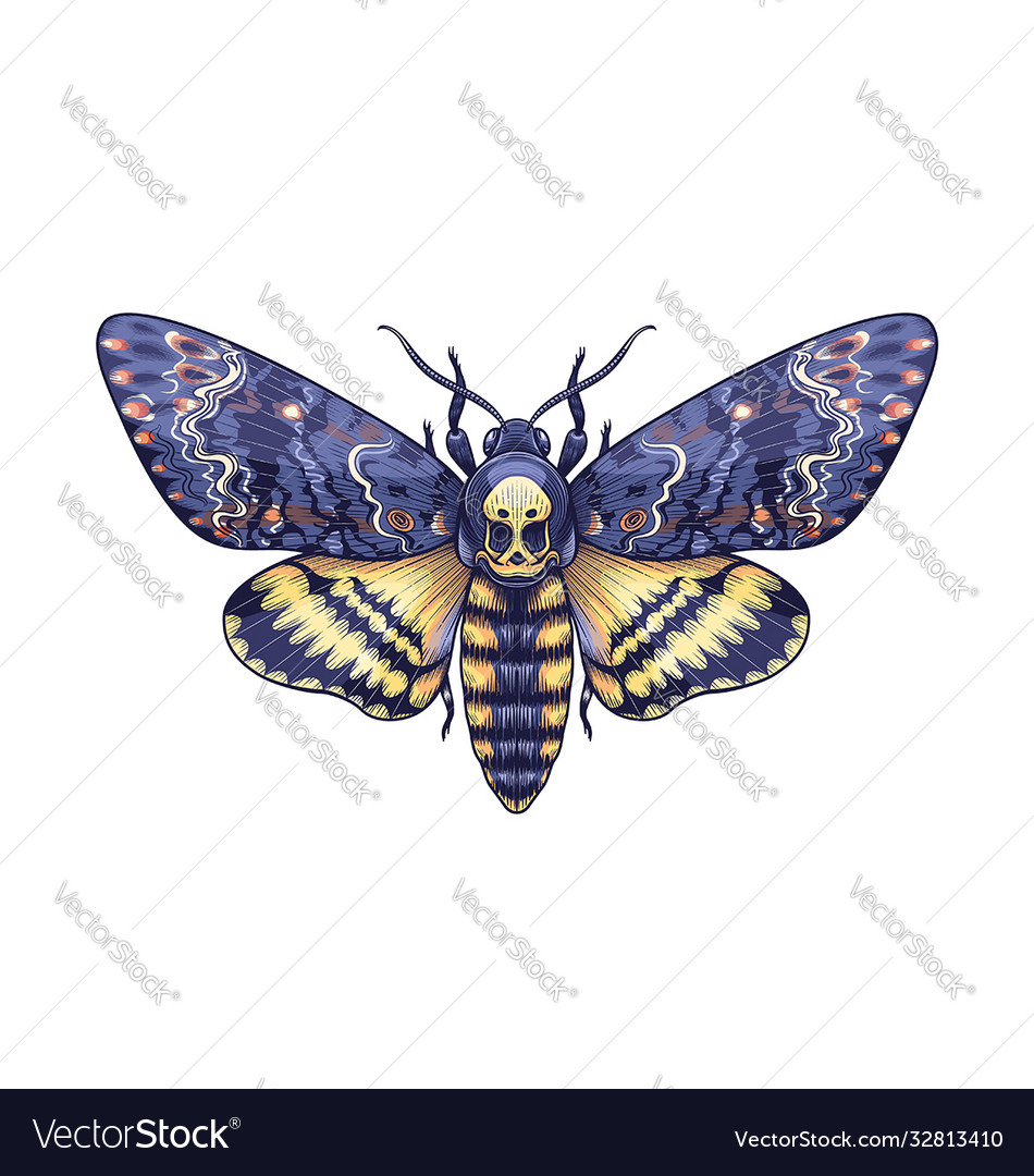 Colored acherontia styx butterfly isolated on