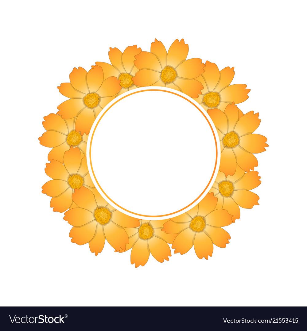 Orange yellow cosmos flower banner wreath vector image mightylinksfo