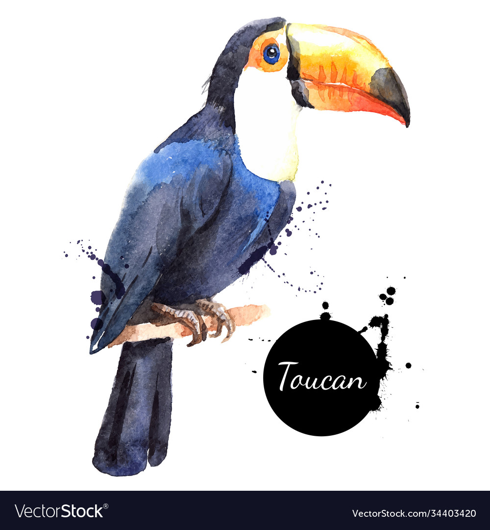 Hand drawn sketch watercolor tropical bird toucan vector