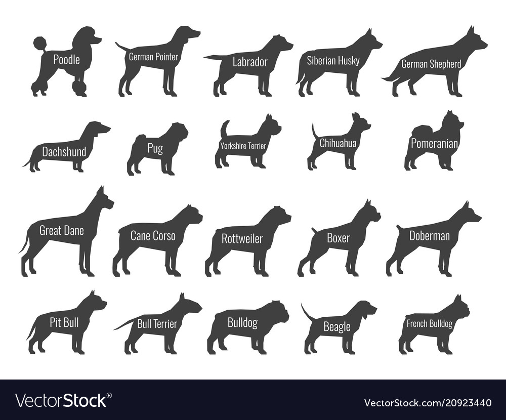 Black dog breeds silhouettes isolated on