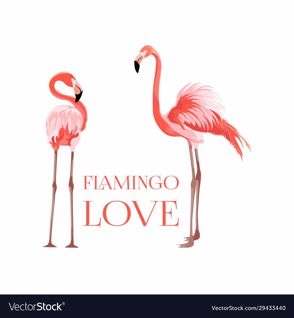 Exotic pink flamingo birds couple