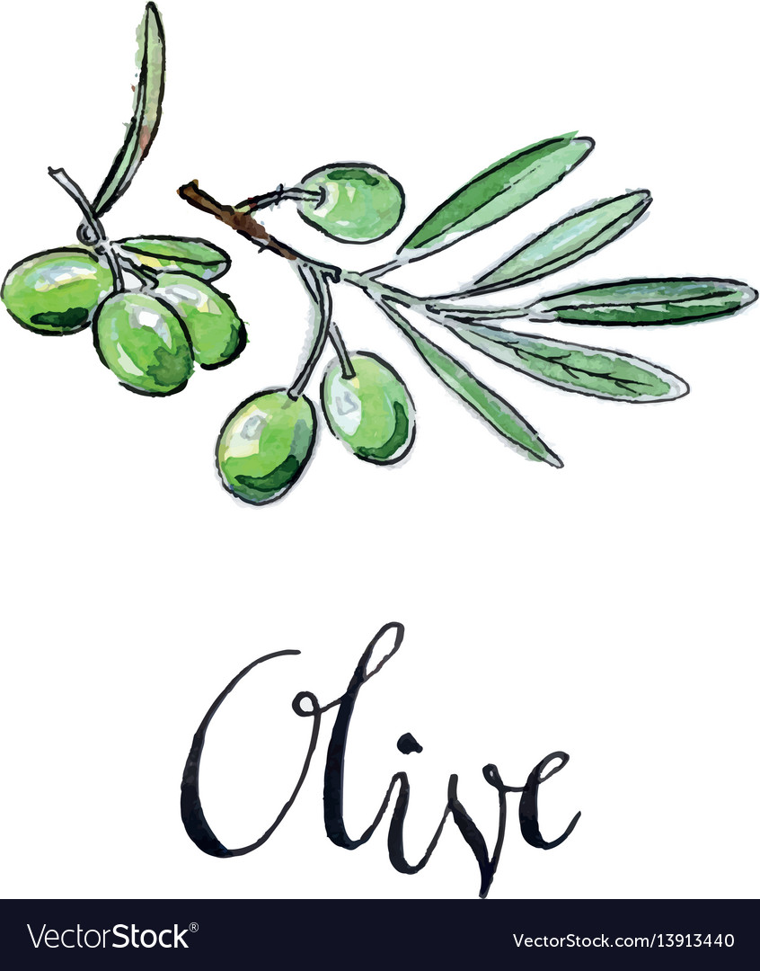 Watercolor green olives