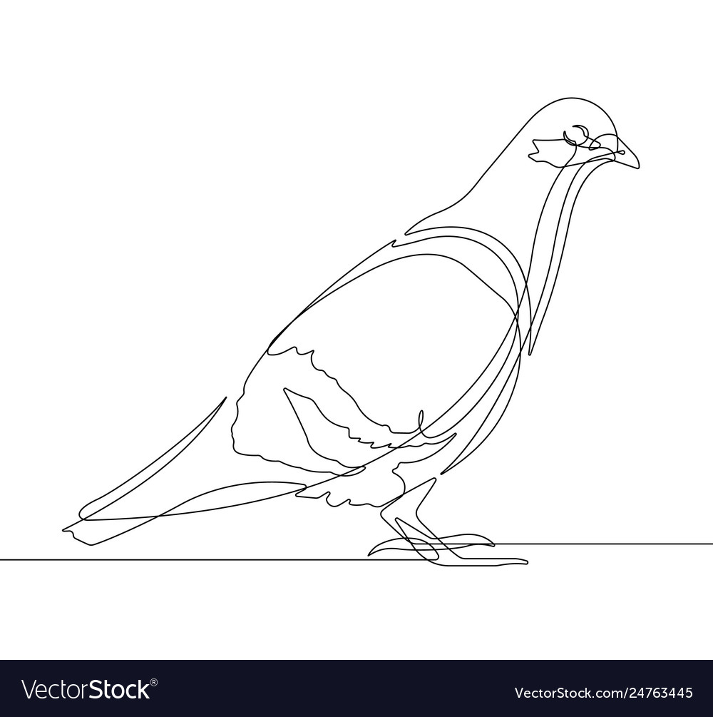 Pigeon bird one continuous line graphic