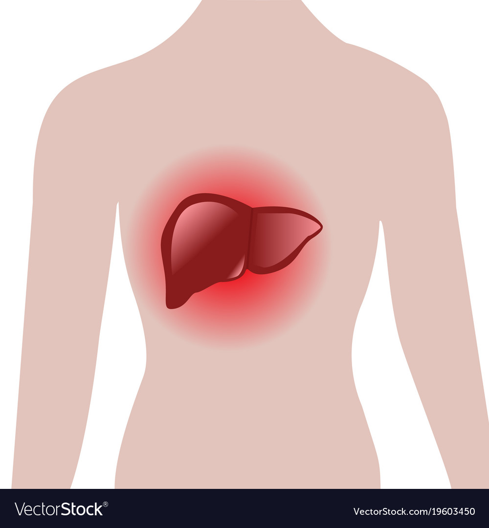 Aching liver in a human body royalty free vector image aching liver in a human body vector image ccuart Choice Image