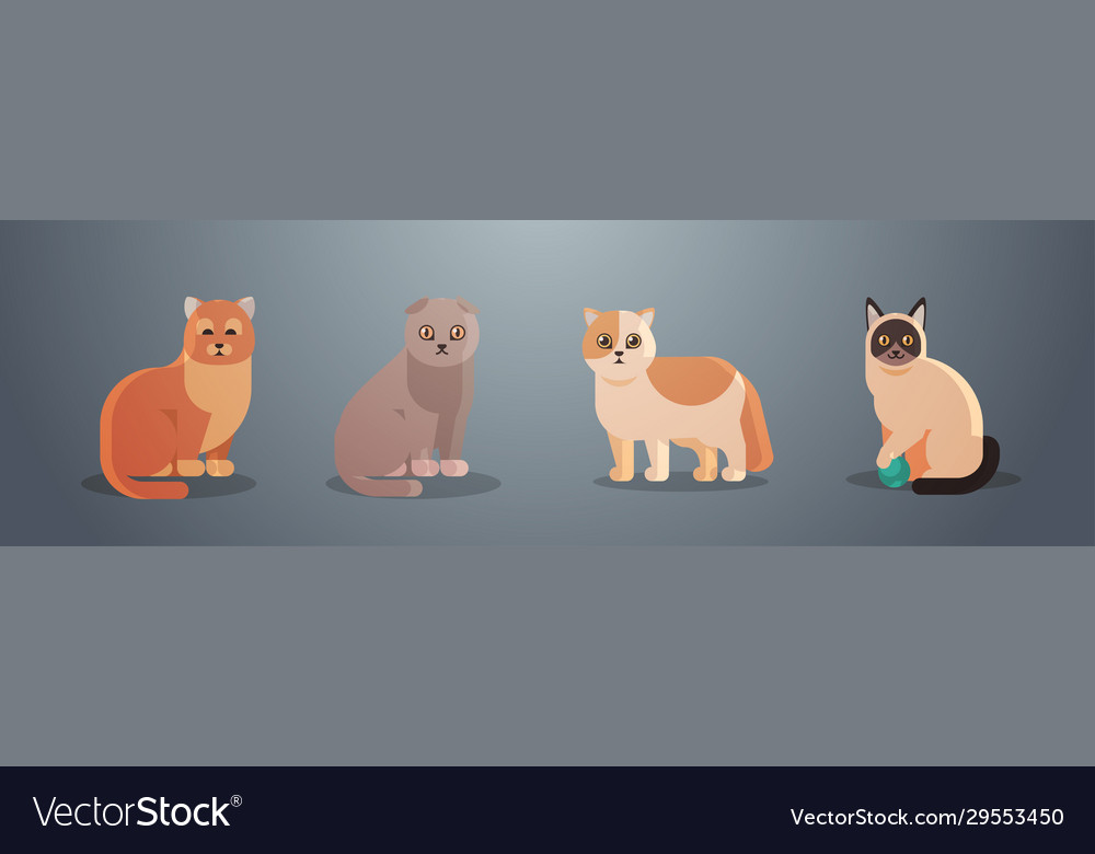 Cute cats fluffy adorable cartoon animals domestic