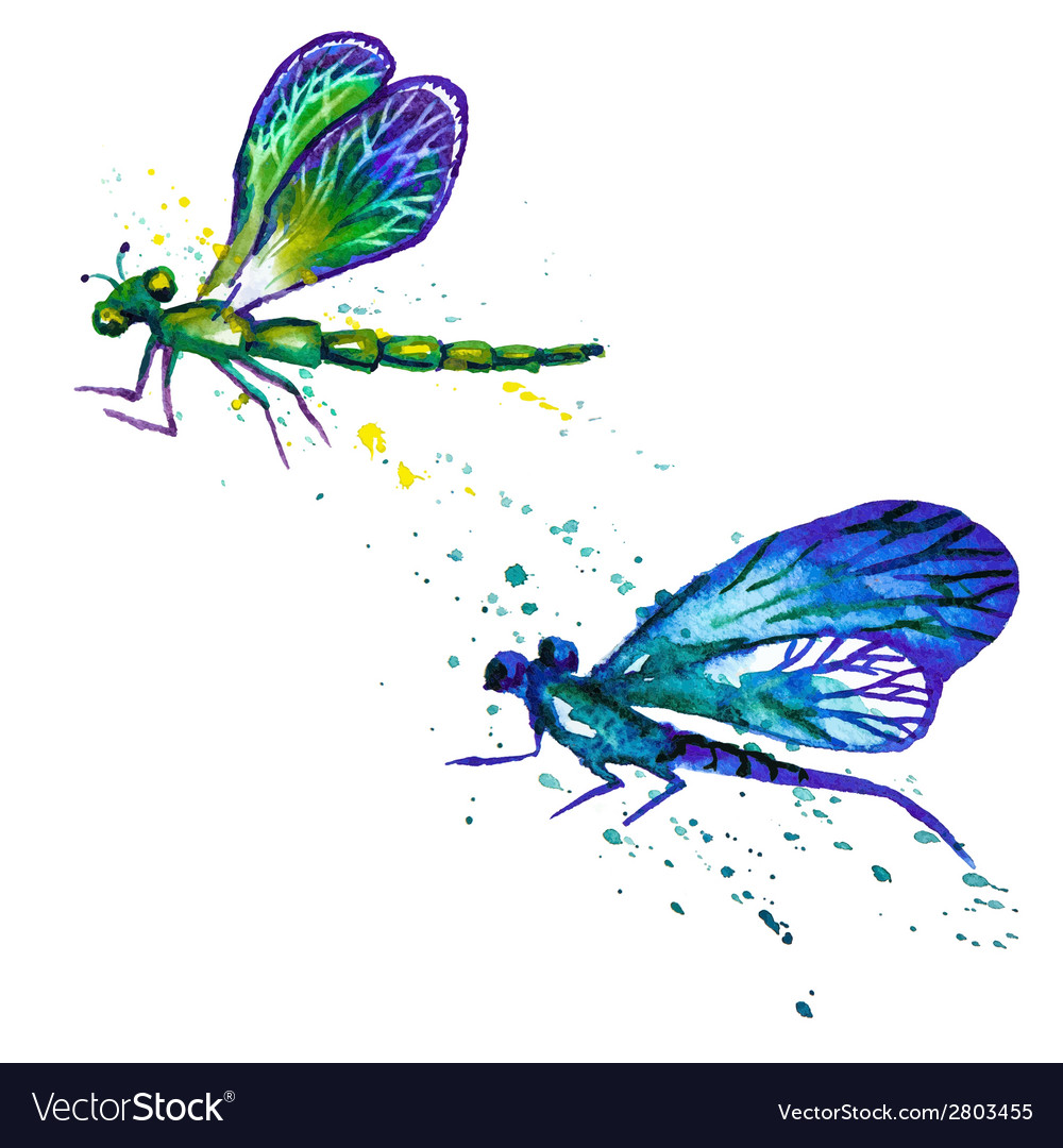 Watercolor dragonflies isolated on the white