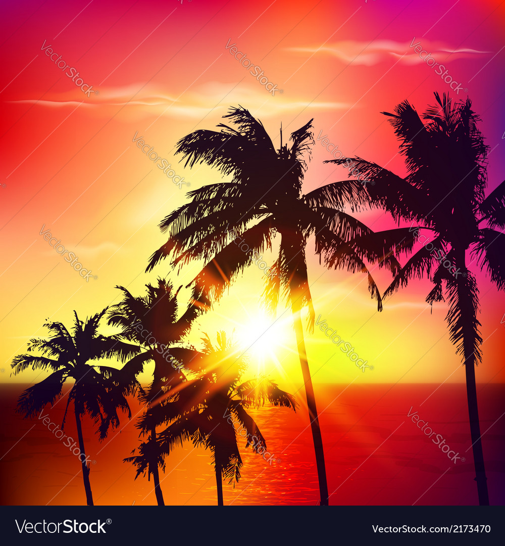 Palm silhouettes on summer sunset vector image