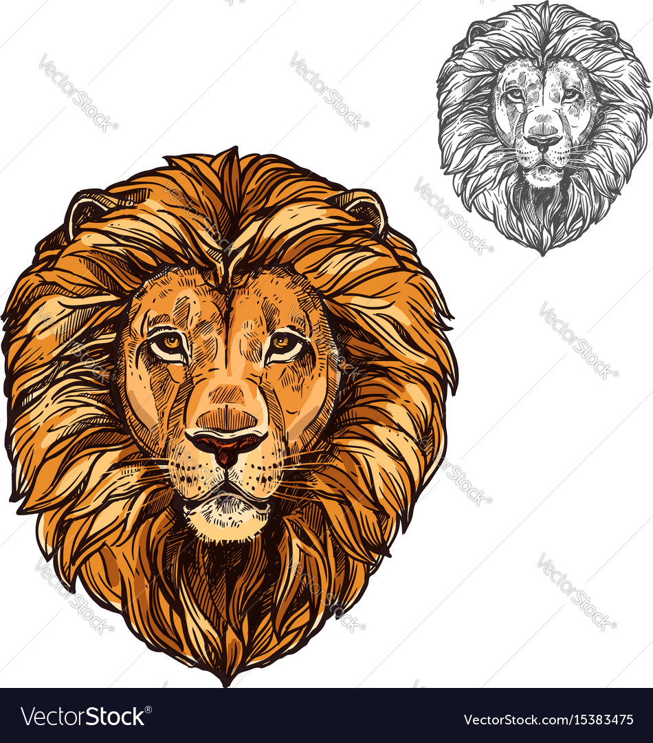 Lion muzzle african wild animal sketch icon