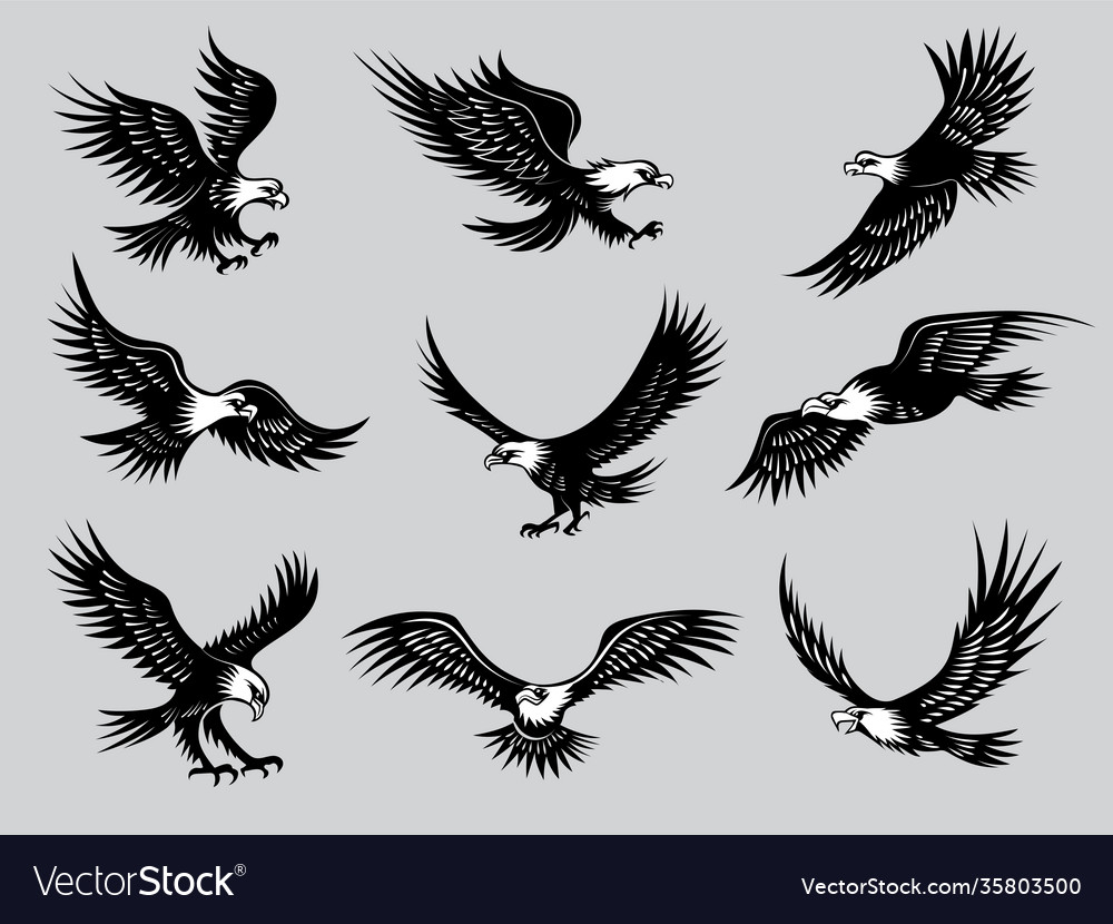Flying eagles silhouettes birds wild hawks vector