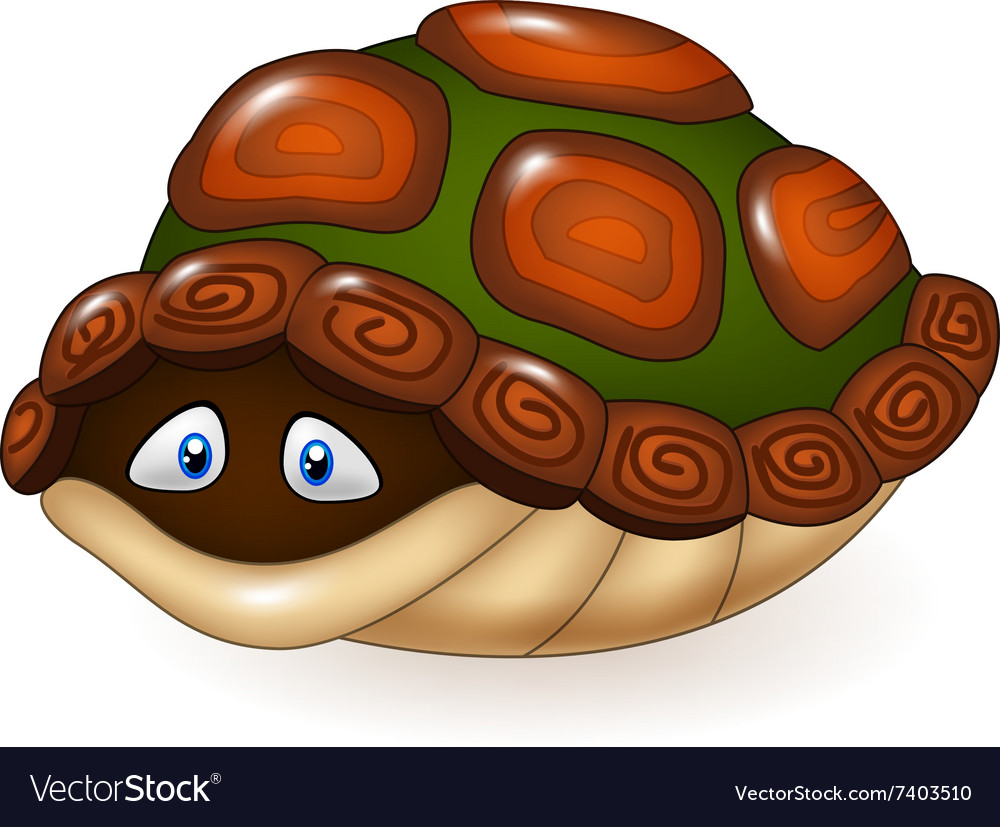 Cartoon Hide Turtle Vector Images 19