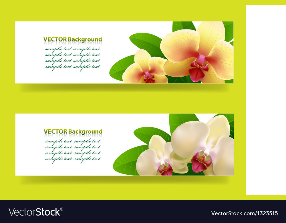 Banner with orchids floral background
