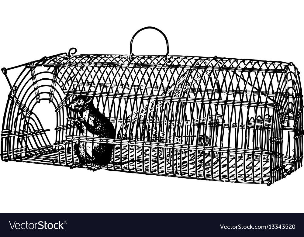 Rat in a trap vector image