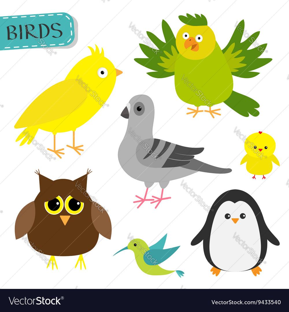 Bird set Colibri canary parrot dove pigeon