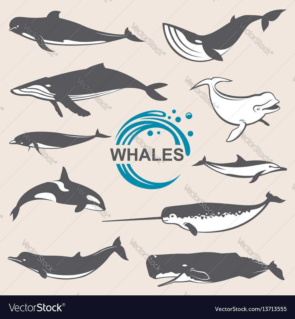 Various whales set