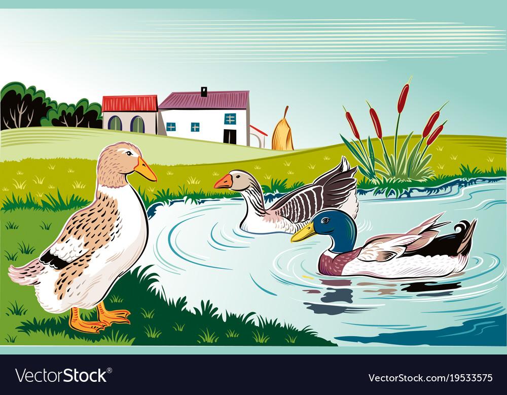 ducks in a pond royalty free vector image vectorstock