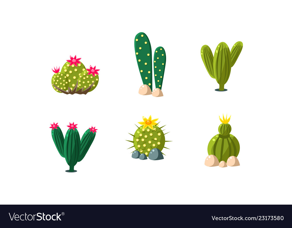Cactuses Set Bright Flowering Desert Plants Vector Image