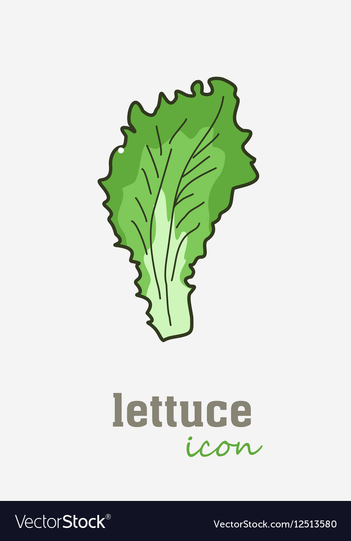 lettuce icon vegetable green leaves royalty free vector  vectorstock