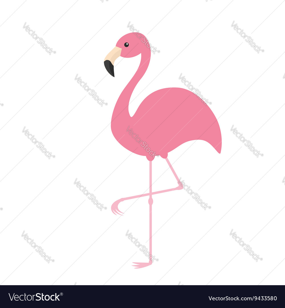 Pink flamingo Exotic tropical bird Zoo animal vector image