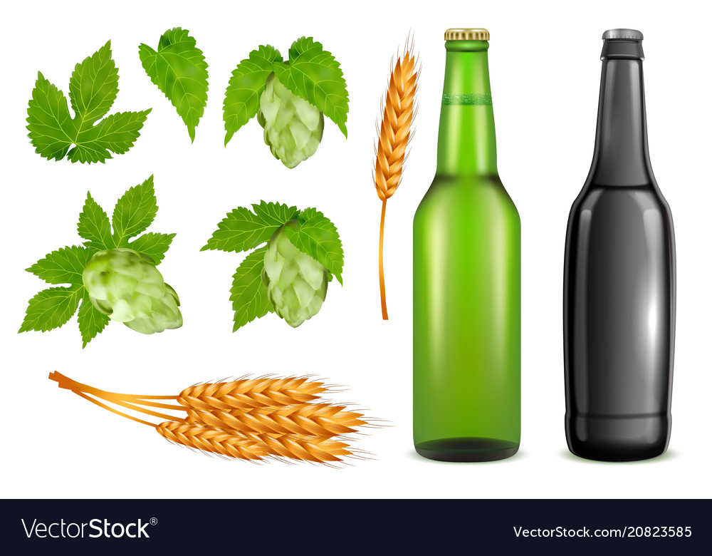 Beer pack realistic icon set vector image