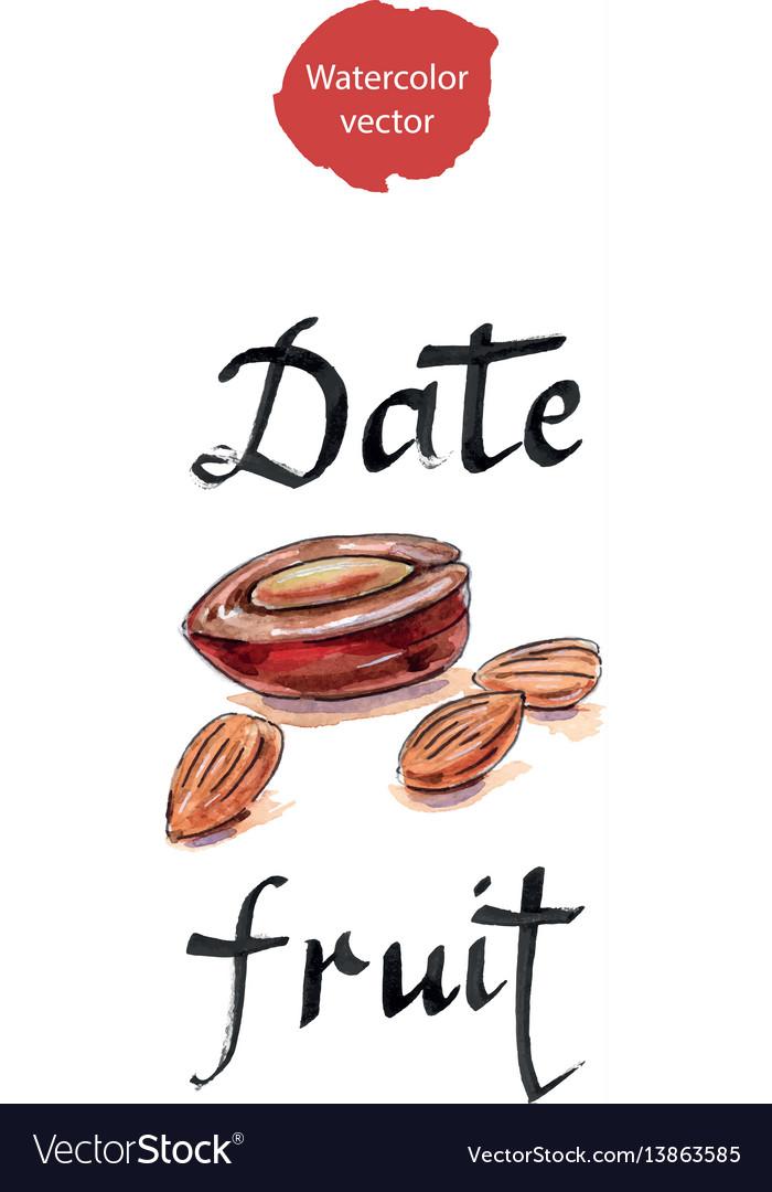 Date fruit arabian delights vector image