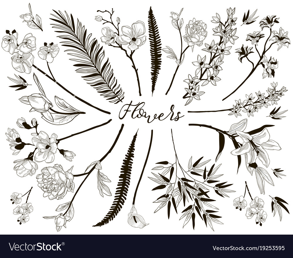 Big collection of floral design elements