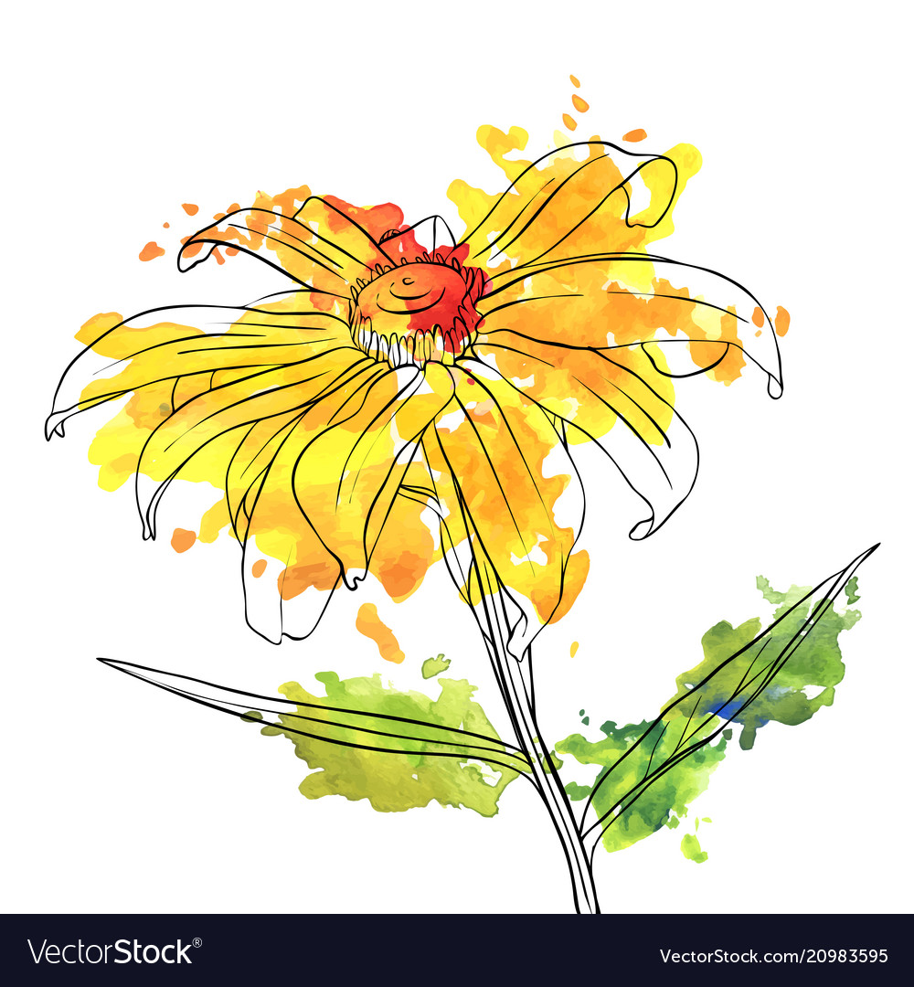 Drawing flower daisy