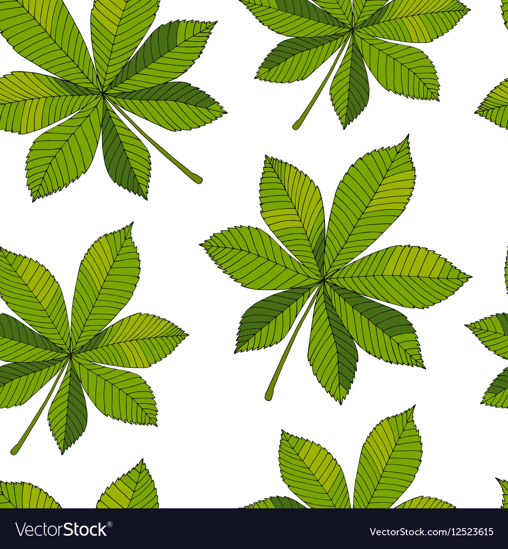 aesculus buckeye horse chestnut chestnut vector image