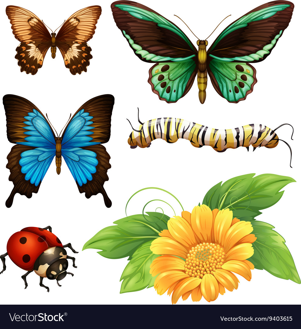 Different Kind Of Butterflies And Bugs Royalty Free Vector