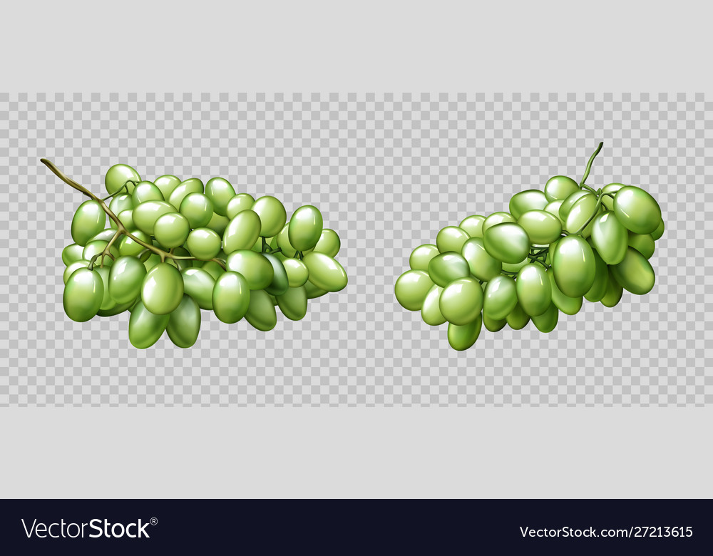 Realistic grapes bunches ripe green berries set