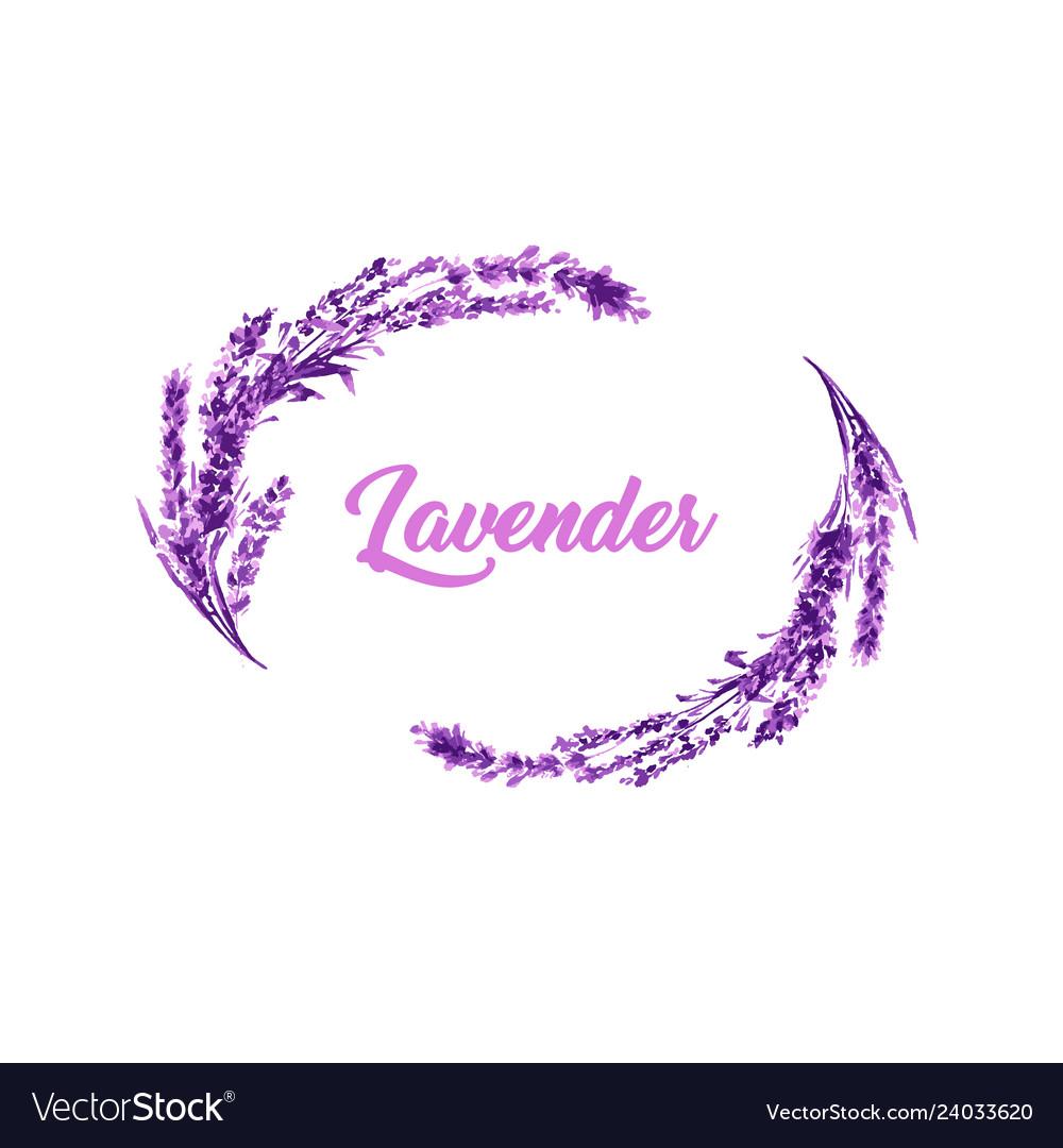 Watercolor or aquarelle paintings of lavender