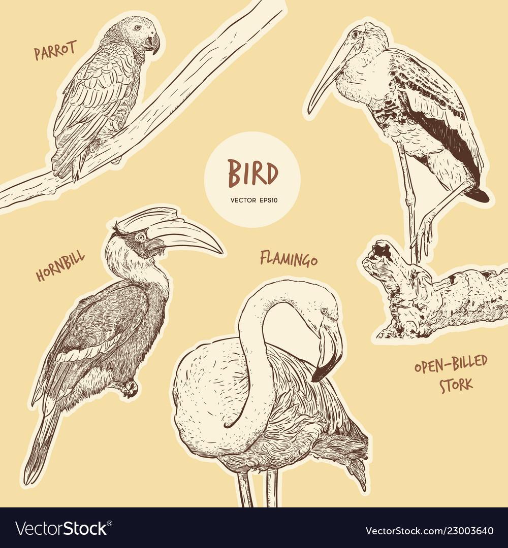 Set hand drawn sketch style exotic birds