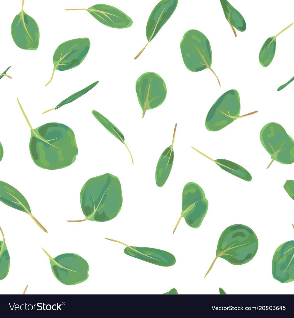 Eucalyptus silver dollar greenery gum tree