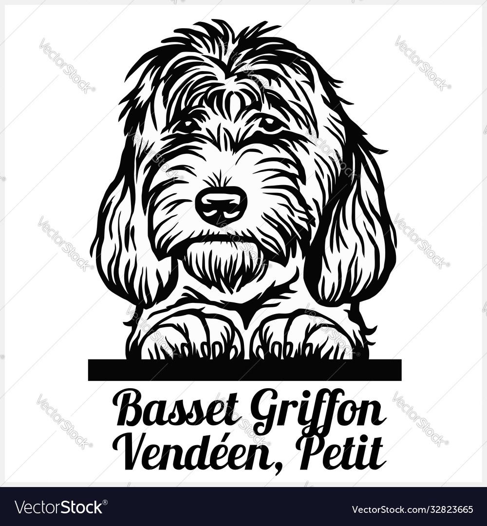 Basset griffon vendeen petit - peeking dogs