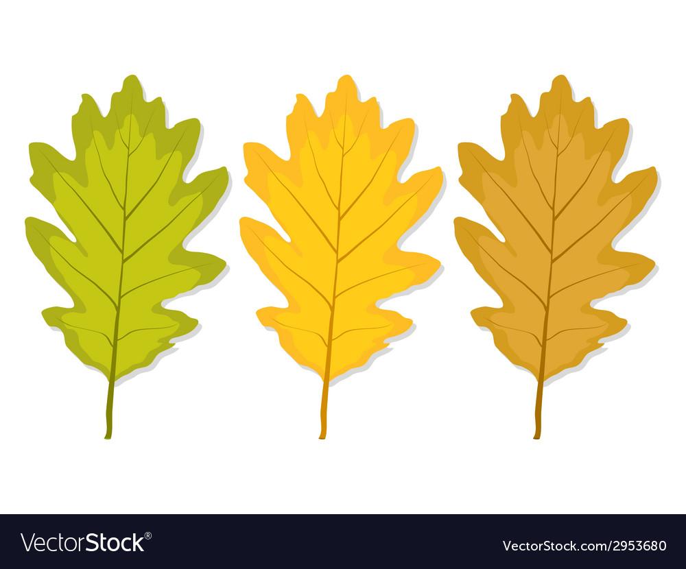 Three Autumn Oak Leaf Royalty Free Vector Image