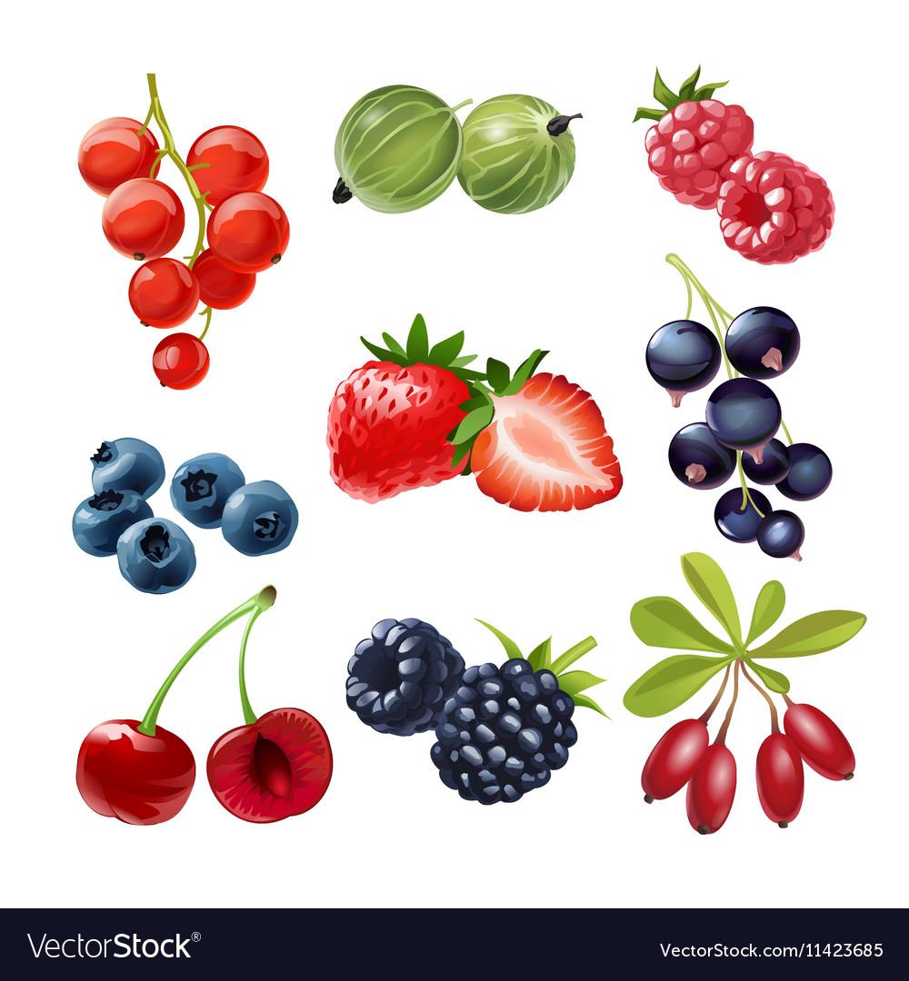 Set of icons juicy ripe berries
