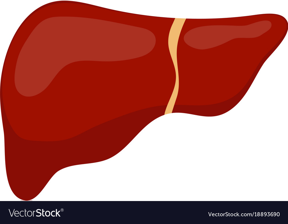 Liver icon flat style internal organs of the
