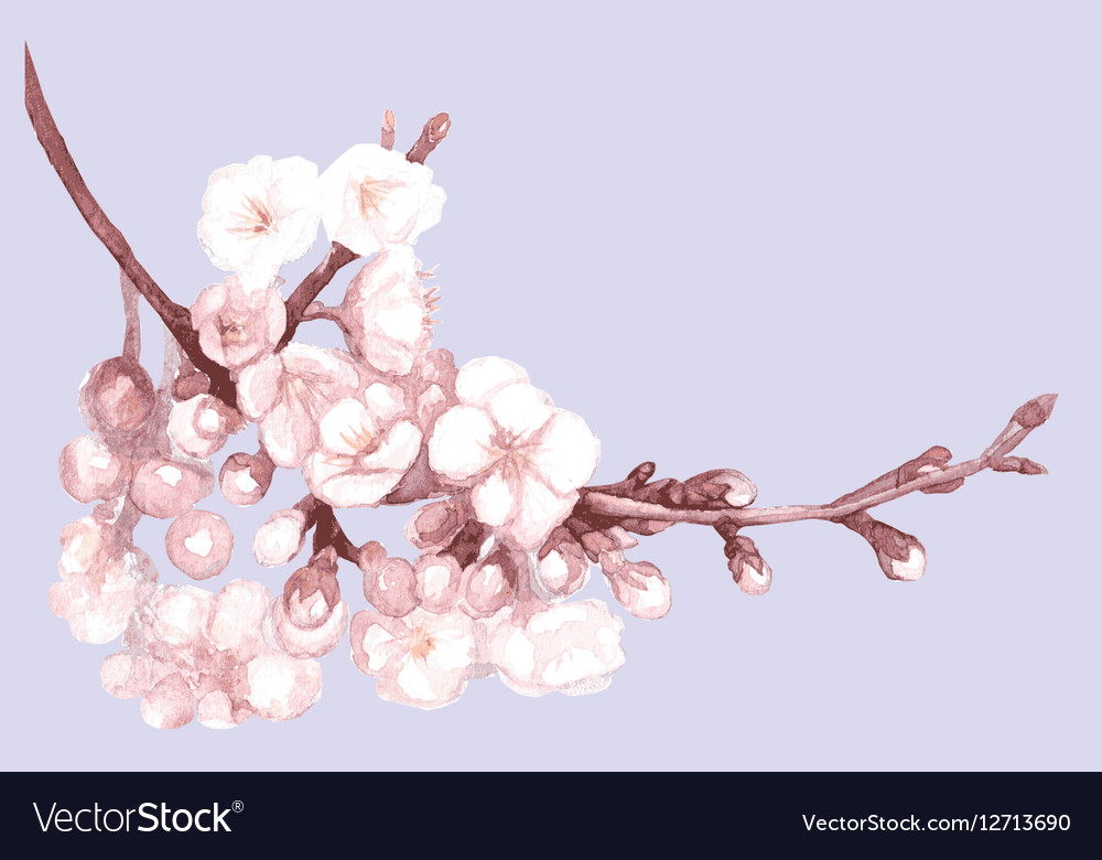 Romantic spring of sakura