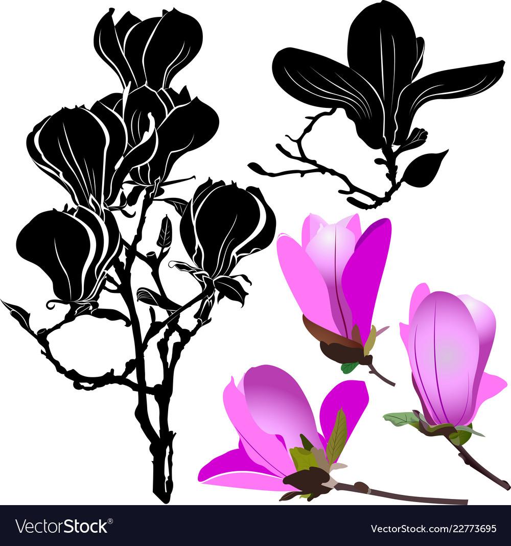 Set flowers magnolia isolated on white background