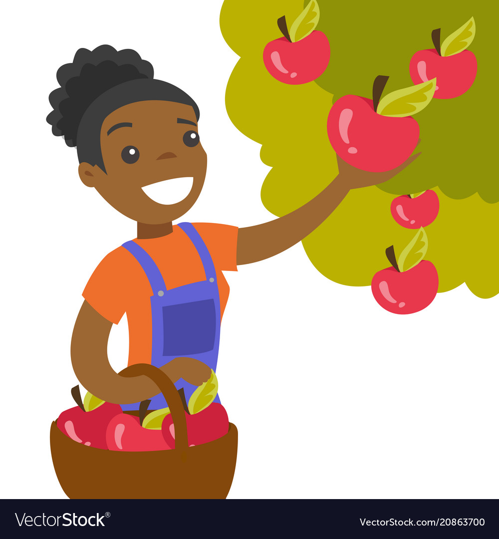 A black woman collects apples from an apple tree