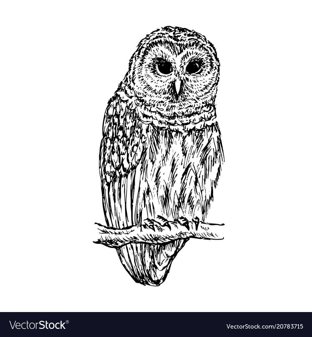 Owl sketch hand drawn