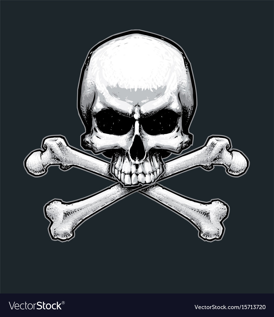 Pirates jawless skull and bones vector image