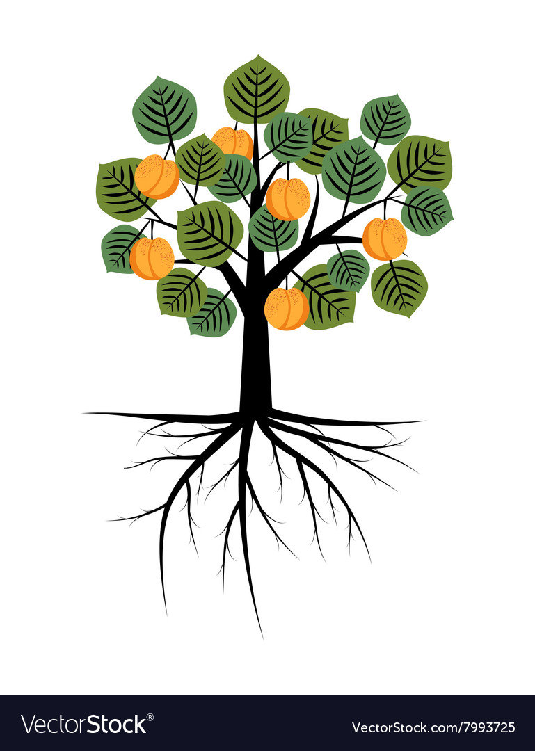 Decorative apricot tree