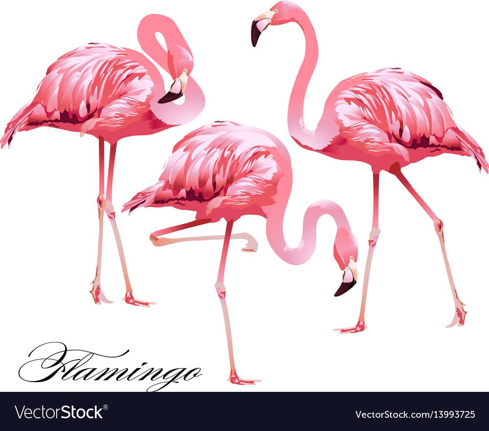 Print flamingos vector image
