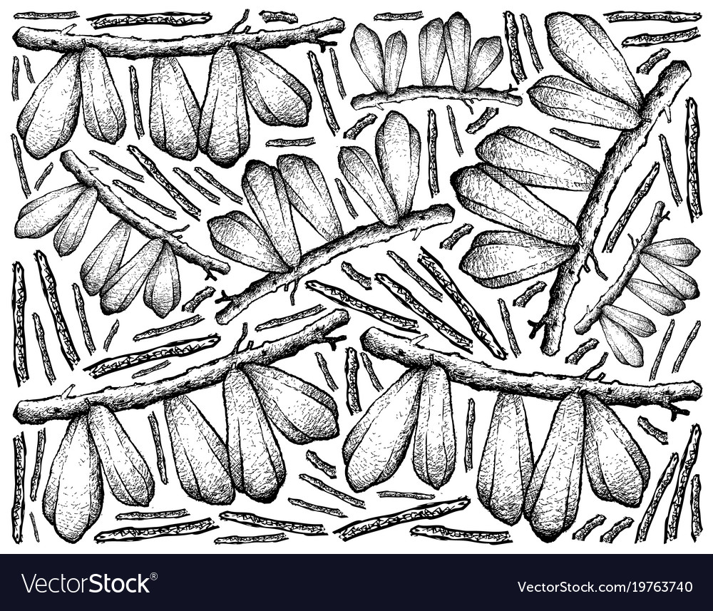Hand drawn of bilimbi fruits on white background
