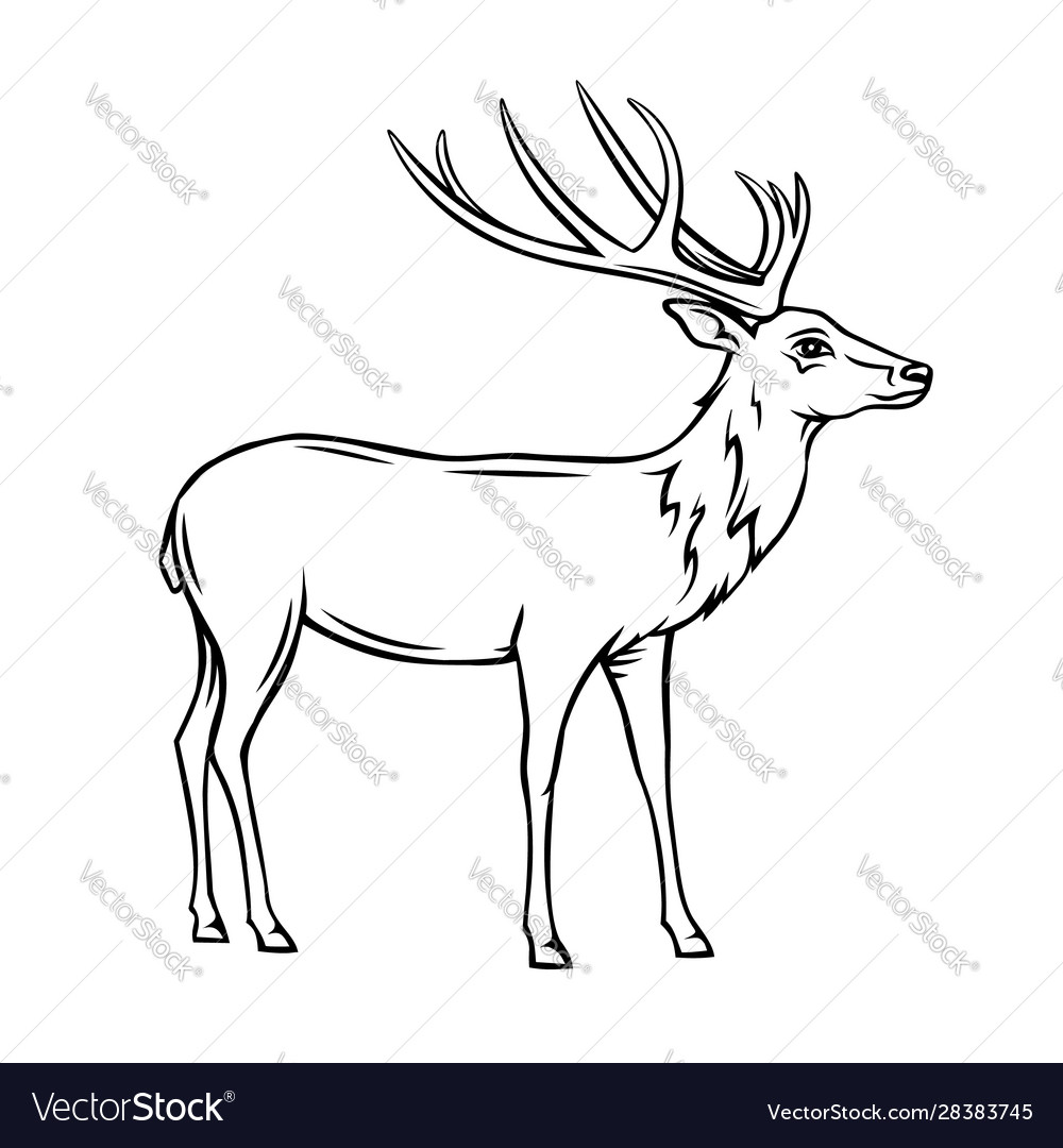 Wild deer icon