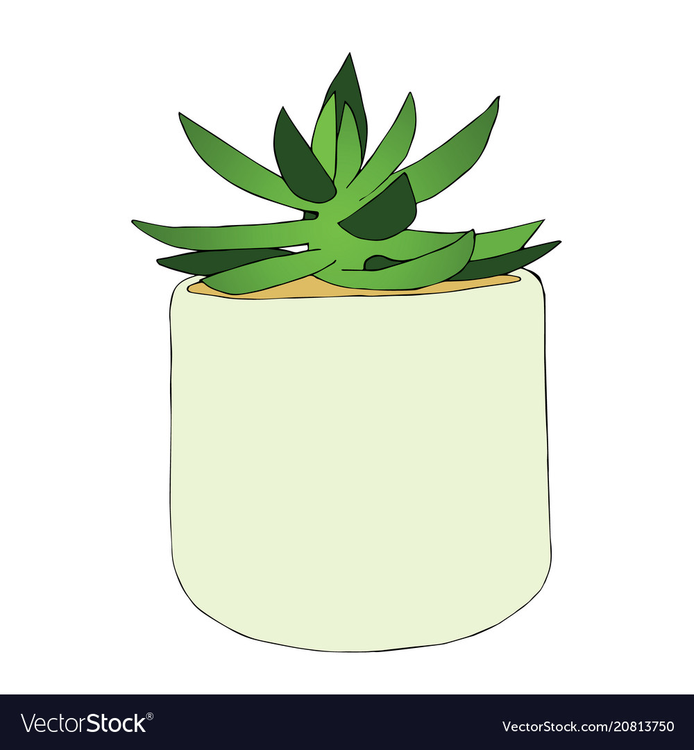 Hand drawn succulent flower in the pot