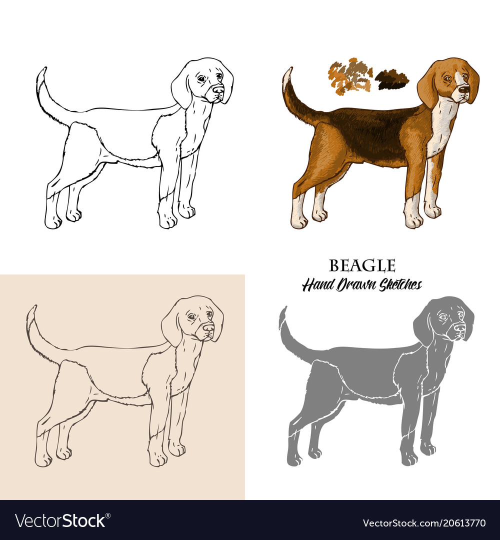 Hand Drawn Beagle Dogs Sketches