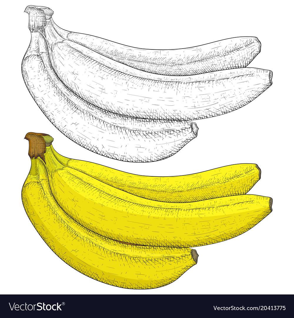 Banana hand drawn sketch