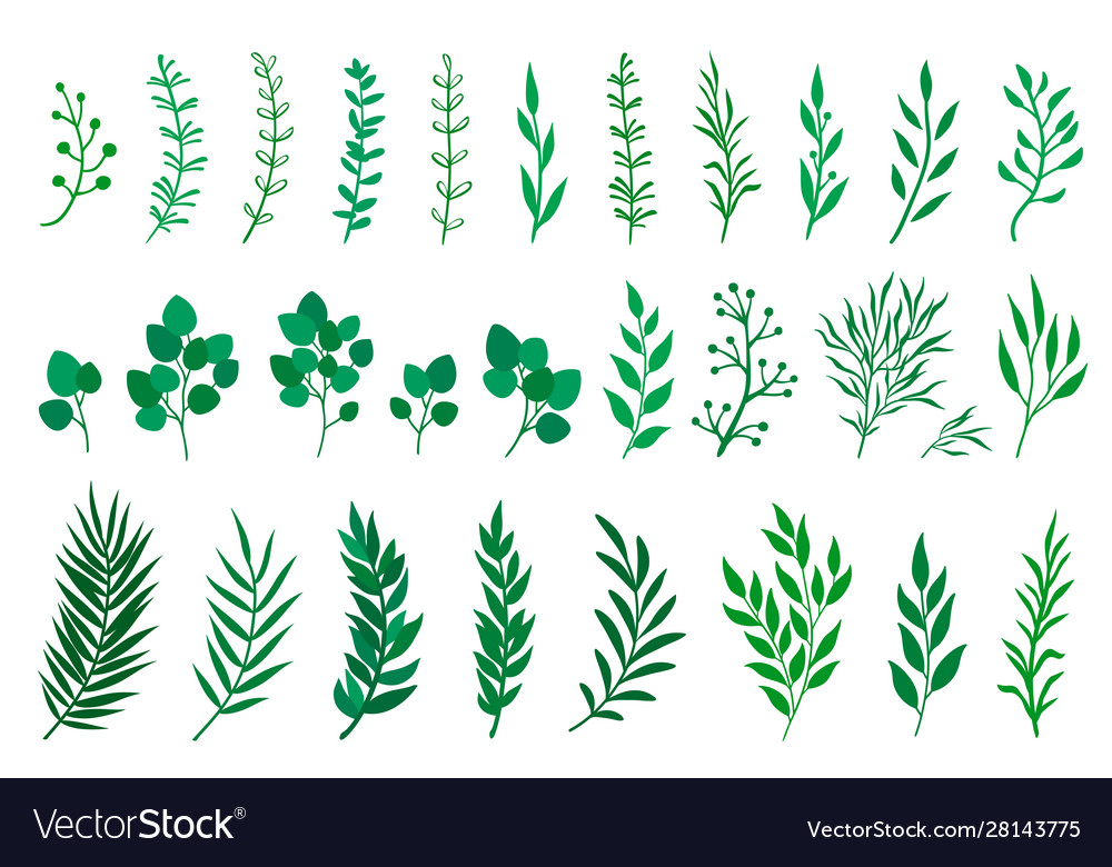 Set green tree branches with leaves