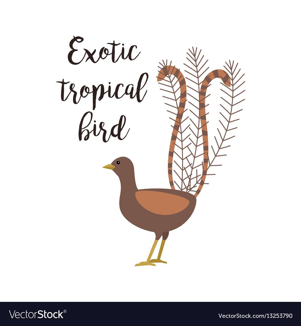 Exotic tropical brown bird